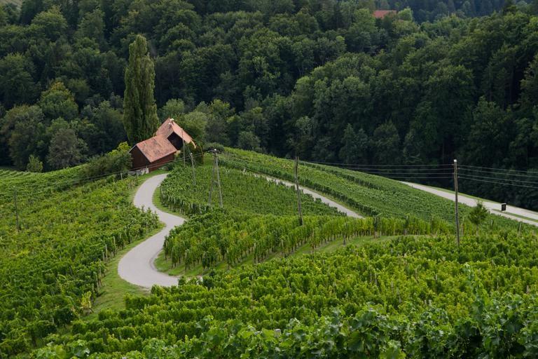 Srce med vinogradi(Špičnik)