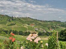 Pogled na vinograde s kmetije Jarc